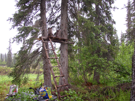 Tree stand with open field to the back