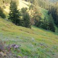 Living in Oregon,I amtruly blessed to have so many places to hike within 10 to 30 miles of my house. Not only do I get to prepare for hunting season by climbing the steep and varied terrain often found in Oregon, I also get to […]